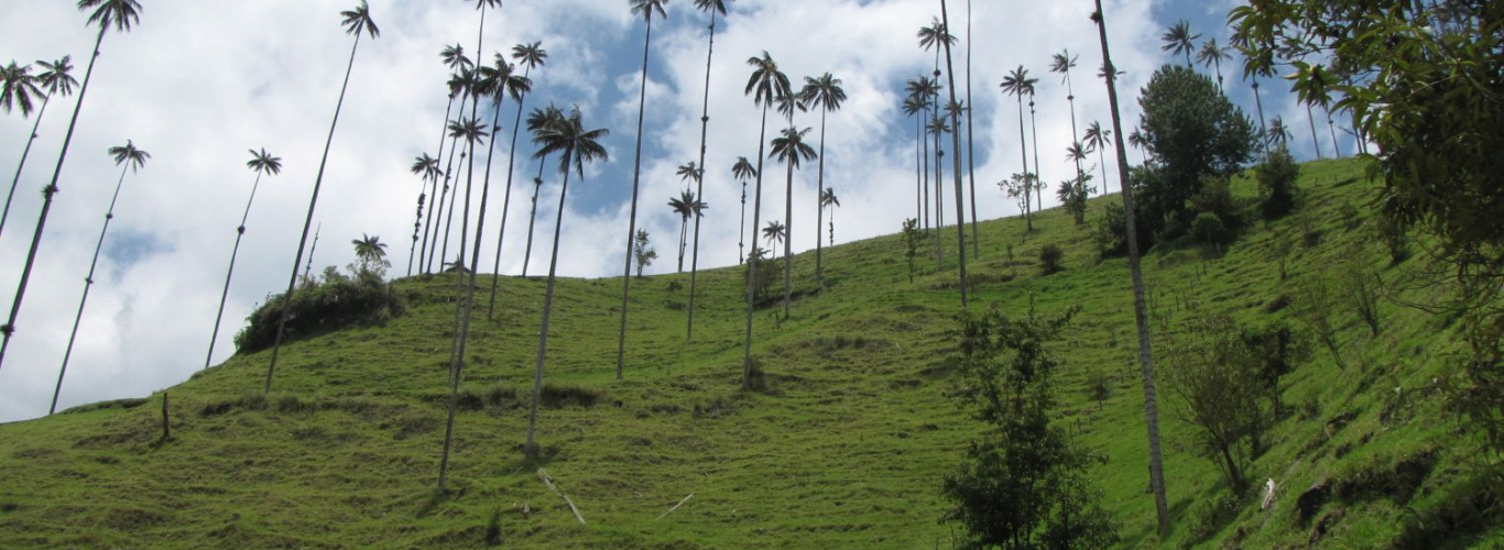Valle de Cocora Condor Travels
